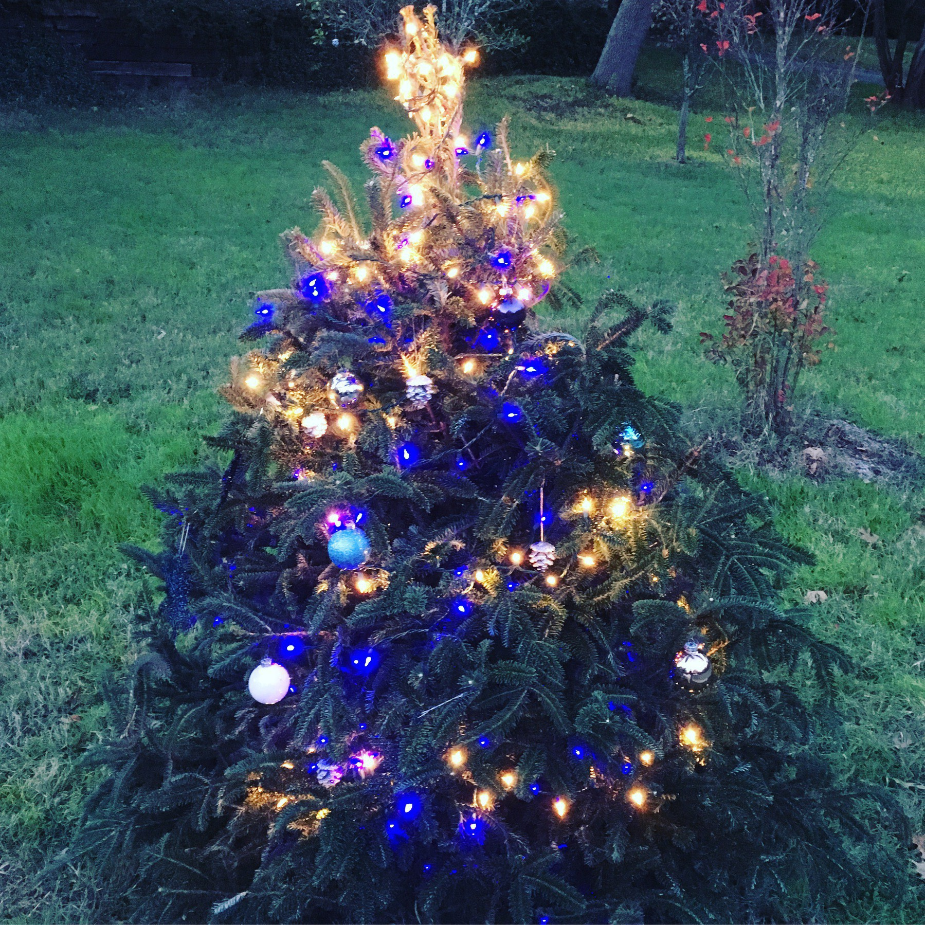 Blue lights for the outside tree